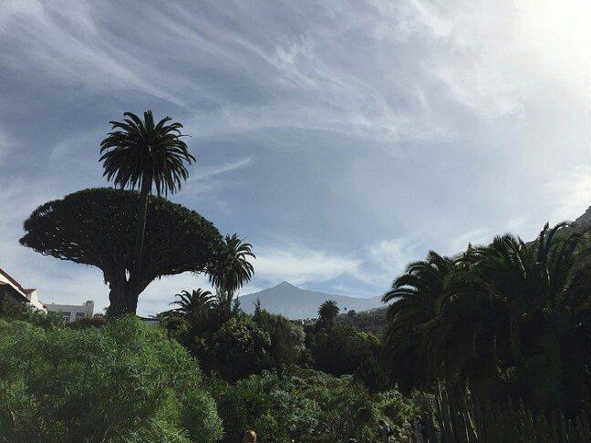 My lovely island of Tenerife ❤ #tenerife, #tenerifelife, #island, #islandlife, #travel, #tour, #tourism, #privatetour, #privateguide, #canaryislands, #canarias, #tenerifehost, #shorexcursions, #shoretour, #vip, #viptour, #daytour, #daytourstenerife, #privatetourstenerife, #naturephotography, #nature, #naturebeauty, #trekking, #hiking, #senderismo, #skies