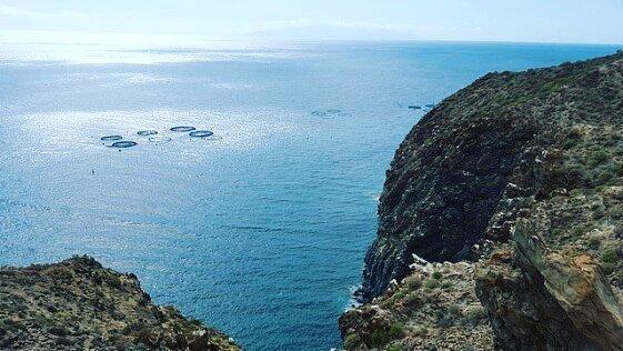 The best snorkeling spots in Tenerife