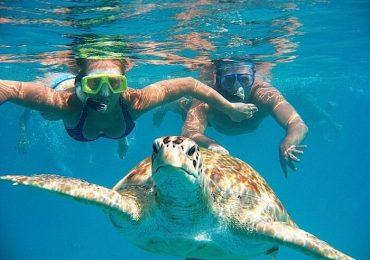 Best snorkeling spots in Tenerife