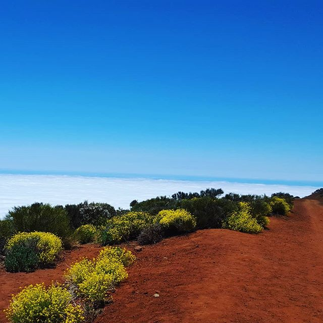 – The road to the Heaven leading you there. Simply beautiful island of Tenerife!